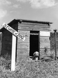 1950s Cocker Spaniel Puppy in Doghouse with Beware of Dog Sign