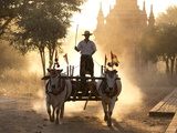 Bullock Cart on a Dusty Track Among the Temples of Bagan