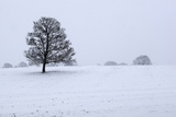 Snowy Landscape with Trees  Broadwell  Gloucestershire  Cotswolds  England  United Kingdom  Europe