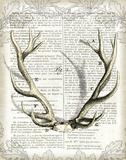 Regal Antlers on Newsprint I