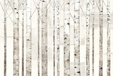 Birch Trees on White
