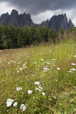 Meadow and the Rosengarten Peaks in the Dolomites Near Canazei  Trentino-Alto Adige  Italy  Europe