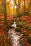 A Small Stream Running Through Charles Wood