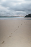 Footsteps in the Sand  Carbis Bay Beach  St Ives  Cornwall  England  United Kingdom  Europe