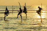 Stilt Fishermen  Dalawella  Sri Lanka  Indian Ocean  Asia