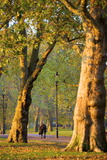 Walking in an Autumnal Hyde Park  London  England  United Kingdom  Europe
