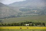 Horses in a Field Near Tafi Del Valle  Salta Province  Argentina  South America