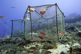 Fishing Cage in Dominica  West Indies  Caribbean  Central America