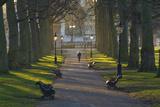 Sunrise  Green Park  London  England  United Kingdom  Europe