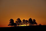 Orange Sky at Dawn  Custer State Park  South Dakota  United States of America  North America