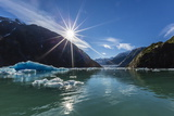Calved Glacier Ice in Tracy Arm-Ford's Terror Wilderness Area
