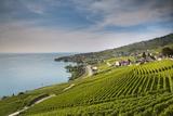 Lavaux Terraced Vineyards on Lake Geneva  Montreux  Canton Vaud  Switzerland  Europe