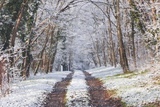 Snow Covered Trees in the Loire Valley Area  Loir-Et-Cher  Centre  France  Europe