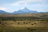 View over Lanin Volcano  Lanin National Park  Patagonia  Argentina  South America