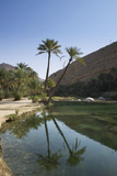 Wadi Bani Khalid  an Oasis in the Desert  Oman  Middle East