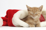 Sleepy Ginger Kitten  5 Weeks  in a Father Christmas Hat