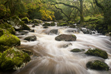 River Plym Flowing Fast Through Dewerstone Wood  Shaugh Prior  Dartmoor Np Devon  UK  October