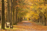 European Beech Trees in Autumn, Beacon Hill Country Park, the National Forest, Leicestershire, UK Papier Photo par Ross Hoddinott