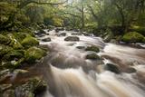 River Plym Flowing Through Dewerstone Wood, Dartmoor Np, Devon, England, UK, October Papier Photo par Ross Hoddinott