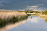 Reed Beds and View Towards Glastonbury Tor from Rspb Reserve  Somerset Levels  Somerset  UK