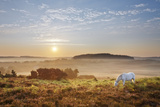 New Forest Pony Grazing on Latchmore Bottom at Dawn  the New Forest National Park  Hampshire  UK