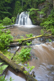 Waterfall with a Fallen Tree  Fairy Glen Rspb Reserve  Inverness-Shire  Scotland  UK  July