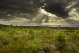 Sun's Rays Shining Through Dark Clouds  Ballynahone Bog  County Antrim  Northern Ireland  UK
