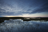 Pools and Bog Peatland at Dawn  Flow Country  Scotland  June