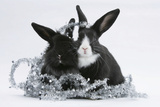 Two Black-And-White Baby Dutch X Lionhead Rabbits with Silver Christmas Tinsel