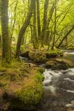 Golitha Falls, River Fowey Flowing Through Wooded Valley, Near St Cleer, Cornwall, UK, May 2012 Papier Photo par Ross Hoddinott