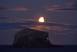 Northern Gannet (Morus Bassanus) Colony  Bass Rock with the Moon Rising  Firth of Forth  Scotland