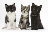 Portraits of Three Kittens