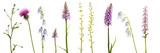Meadow Flowers  Fleabane Thistle  Bearded Bellfower  Common Spotted Orchid  Twayblade  Austria