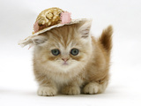 Ginger Kitten Wearing a Straw Hat