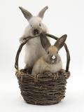 Two Baby Rabbit in a Wicker Basket