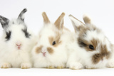 Three Cute Baby Bunnies Sitting Together