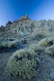 Pterocephalus Lasiospermus with Rock Formations in Distance  Teide National Park  Tenerife  Spain