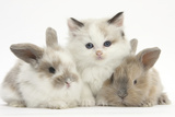 Colourpoint Kitten with Two Baby Rabbits