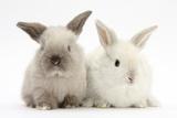 White and Grey Baby Rabbits