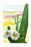 Blooming Saguaro Cactus in Desert