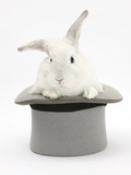 White Rabbit in a Grey Top Hat