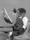 1950s Chimp in Overalls Sitting in Chair at Typewriter with Pencil and Steno Pad