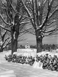 1940s Pile of Snow-Covered Firewood Logs Stacked Between Two Trees