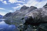 Weddell Seal Resting on Rocks