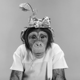 1960s Portrait Monkey Chimpanzee Wearing Stupid Funny Hat with Bow and Flower