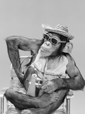 1960s Monkey Chimpanzee Wearing Hat Sunglasses Binoculars Sitting in Beach Chair