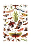 Vintage Illustration of Winged Insects