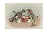 Vintage Postcard of Three Cats Making Christmas Pudding