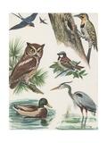 Variety of Birds