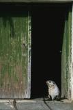 Fur Seal Standing in Doorway